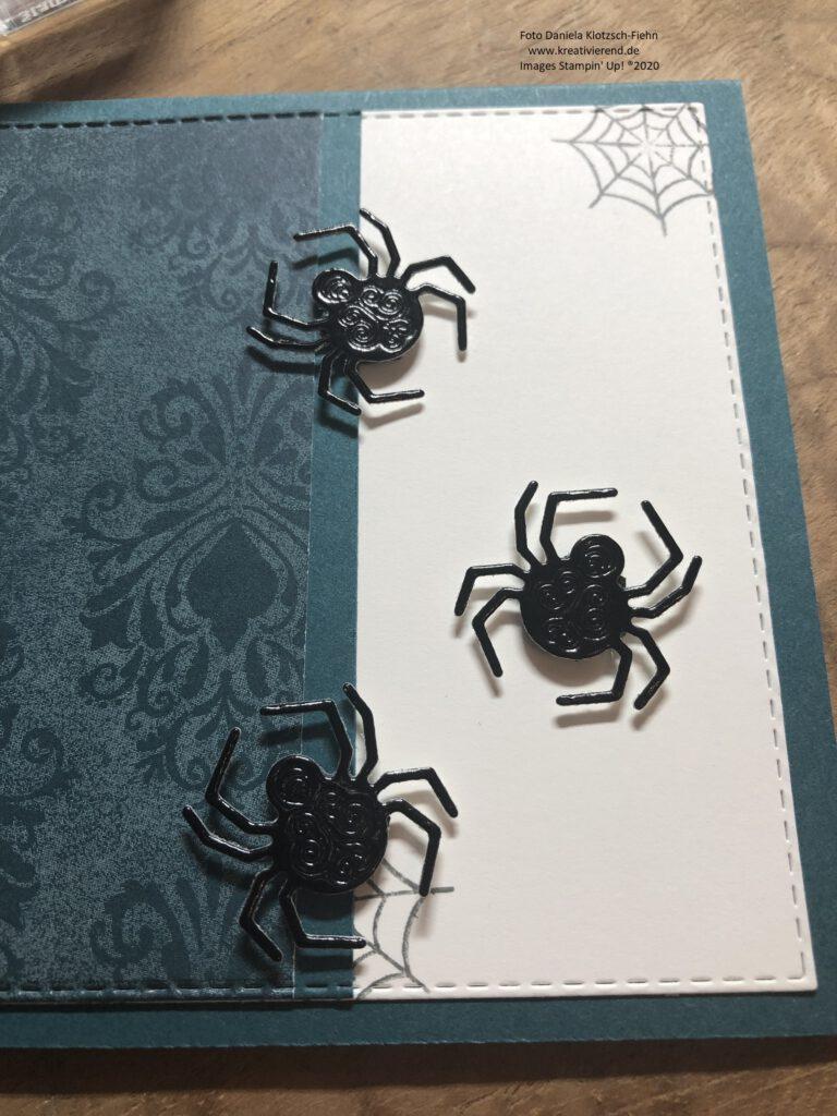 Spinnen ganz nah...